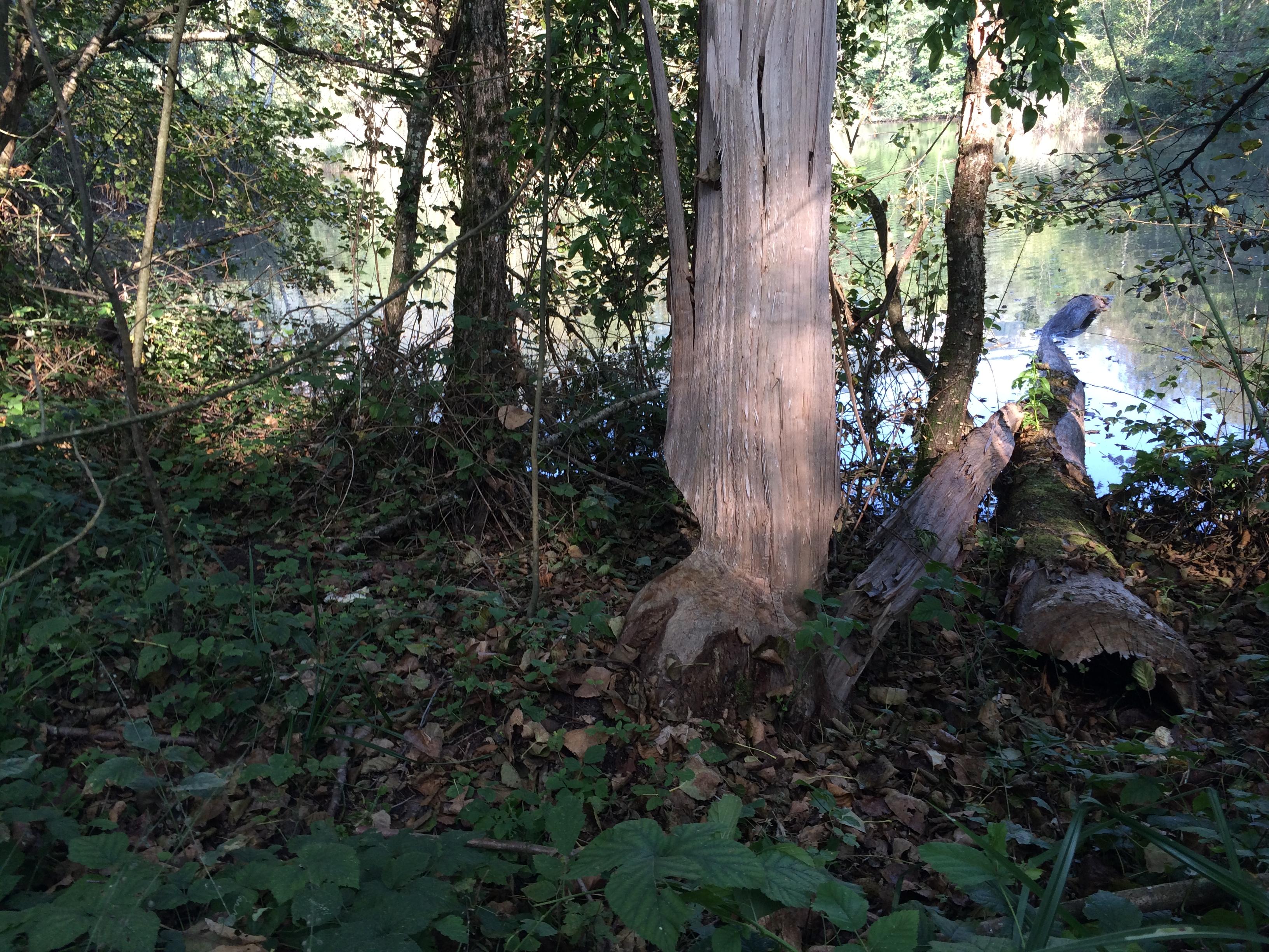 visite d'un espace naturel sensible à Serrières de Briord